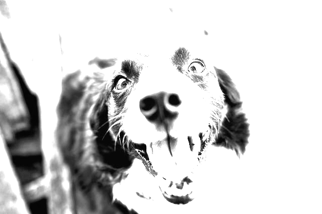 This example turns the same image of a doggy into its black-and-white version by setting custom grayscale weights for (red, green, blue) channels to (1, 1, 1). Background in the resulting image is barely visible.
