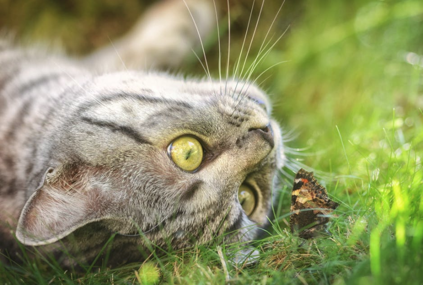 This example simply converts a JPEG image of a cat looking at a butterfly to a PNG image one-to-one, preserving all pixels and quality, and the output PNG doesn't have transparency enabled.