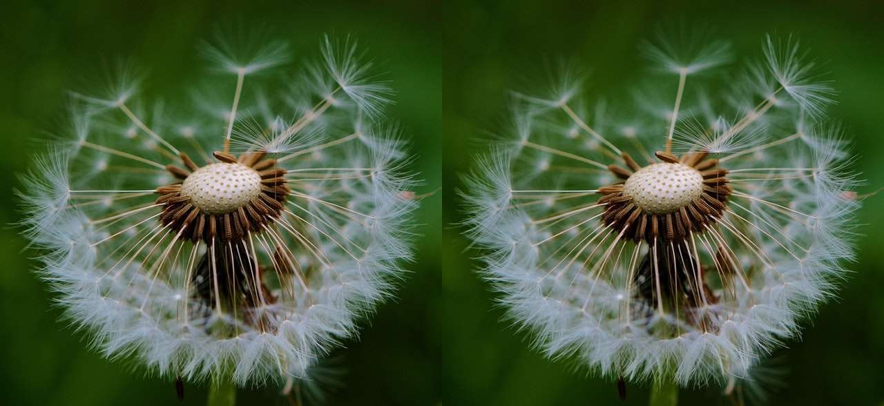 This example duplicates an image of dandelions horizontally twice.