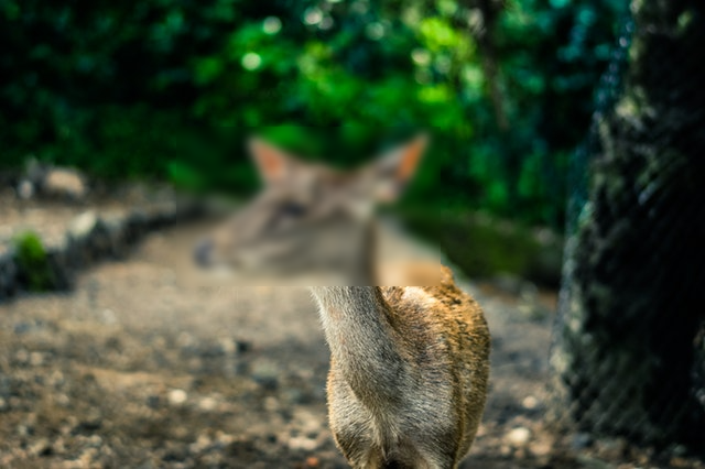 This example blurs an area in an image. Only the face of the animal is blurred, and the rest of the image is left untouched.